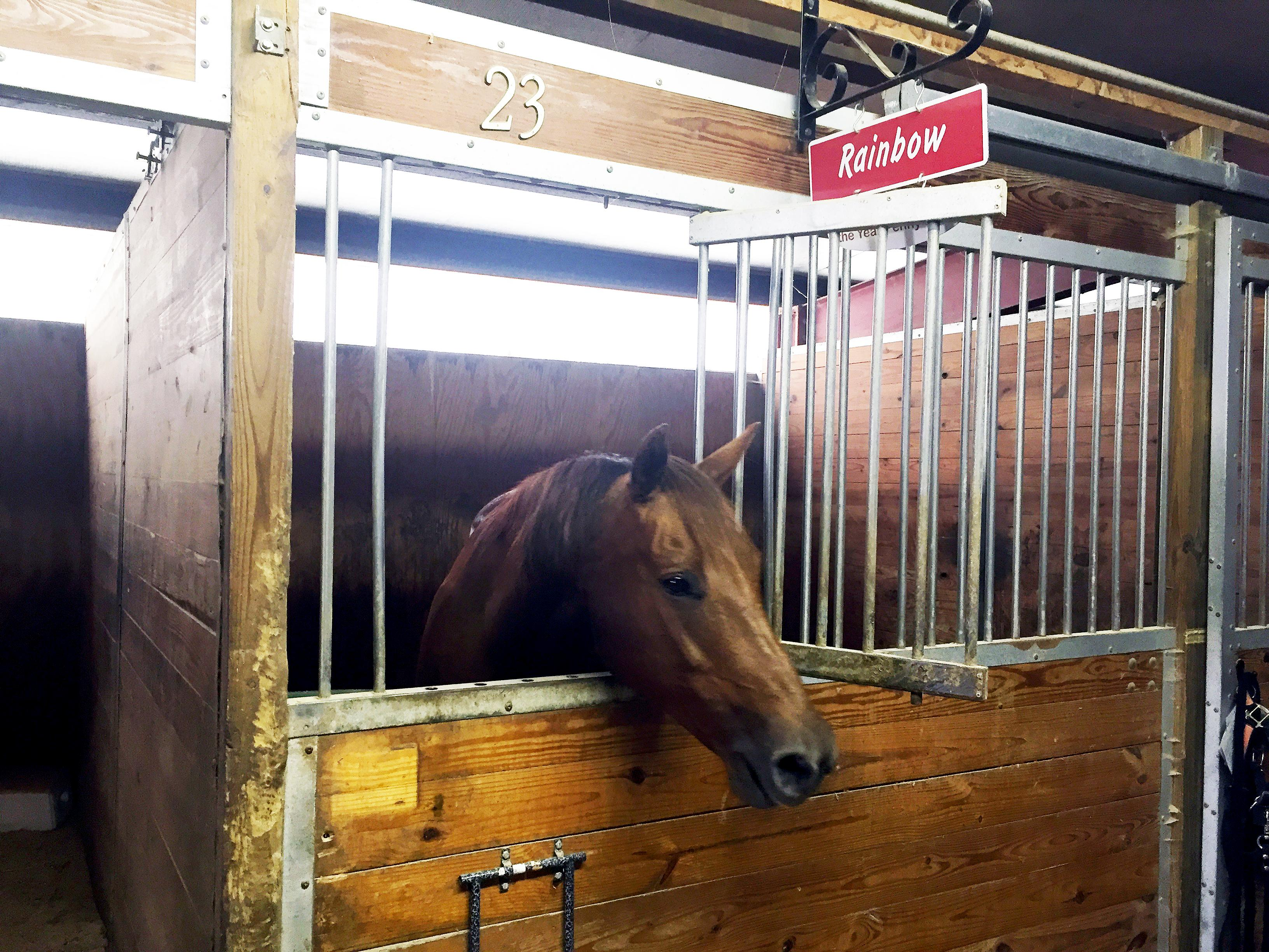 Original | Rainbow the Horse in her stall at HETRA
