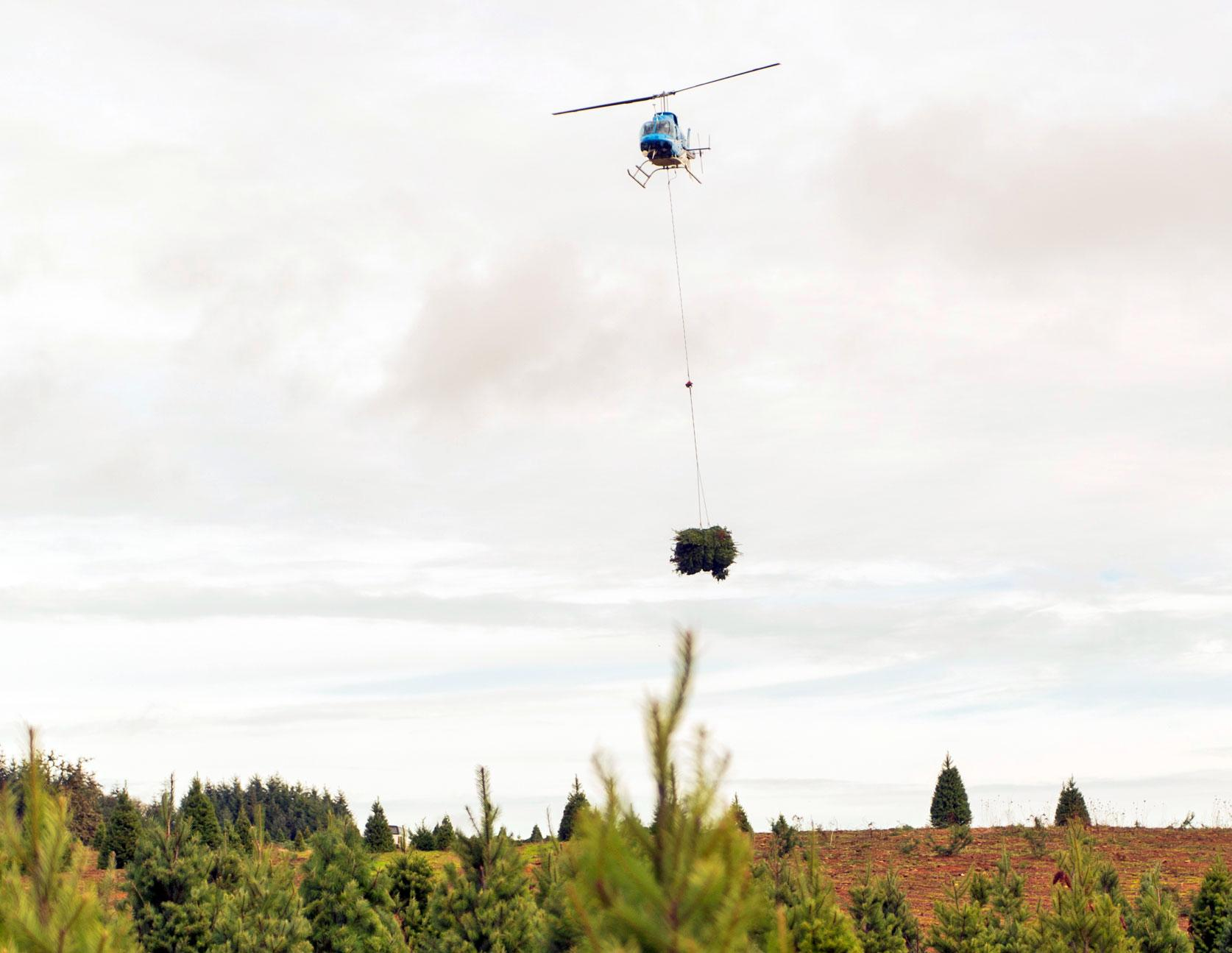 Original | Inside Track: A Christmas Tree's Journey - helicopter
